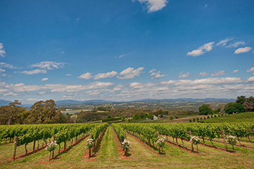 Elmswood-Estate-Upper-Yarra-Valley