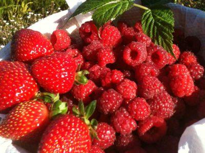 berrie-farm