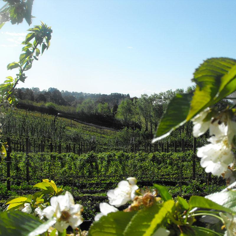 berry farm yarra valley
